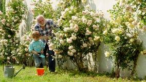 Kleine jongen die bloemen besproeien in de zomertuin. Het water geven van bloemen in tuin. Portret van Grootvader en Kleinzoon stock videobeelden