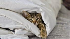 Kleine junge Katze lizenzfreie stockfotos