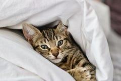 Kleine junge Katze Stockbild