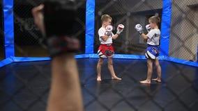 Kleine Kämpfer bereiten sich zur Auseinandersetzung vor stock footage