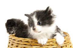 Kleine Kätzchen. stockbild
