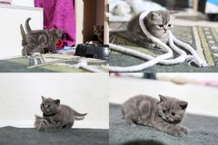 Kleine Kätzchen, die auf dem Teppich mit Seil, multicam, Schirm des Gitters 2x2 spielen Lizenzfreie Stockfotografie