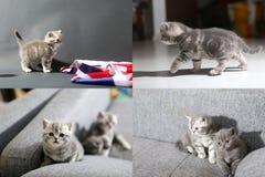 Kleine Kätzchen, die auf der Couch, multicam, Schirm des Gitters 2x2 ausüben Stockfotos