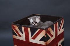 Kleine Kätzchen in einem Fotostudio Lizenzfreies Stockbild