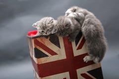 Kleine Kätzchen in einem Fotostudio Lizenzfreie Stockfotos