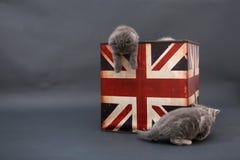 Kleine Kätzchen in einem Fotostudio Stockbilder