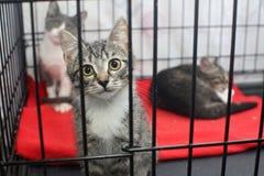 Kleine Kätzchen in einem Käfig eines Schutz Stockbilder