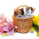 Kleine Kätzchen in einem Korb und in den Blumen Lizenzfreies Stockbild