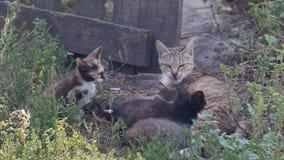 Kleine Kätzchen im Dorf stock video footage