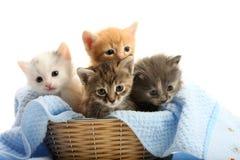 Kleine Kätzchen im Strohkorb Stockbild