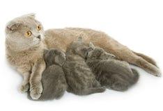 Kleine Kätzchen und Mutterkatze Lizenzfreie Stockfotos