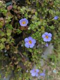 Kleine köstliche kleine Blumen stockfoto