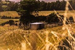 Kleine Kabine in der Landschaft mit Goldgras stockfotos