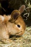Kleine Kaninchen lizenzfreies stockfoto