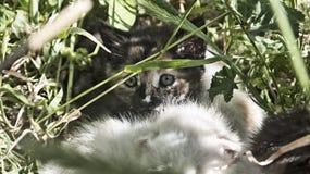 Kleine kat Stock Fotografie