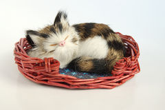 Kleine kat Royalty-vrije Stock Afbeelding