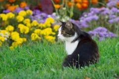 Kleine kat Royalty-vrije Stock Foto's