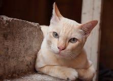 Kleine kat met zacht bont Royalty-vrije Stock Foto