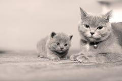 Kleine katje en moeder stock foto's