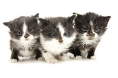 Kleine katjes. stock afbeelding