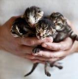 Kleine katjes Royalty-vrije Stock Fotografie