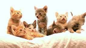 Kleine katjes stock footage