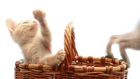 Kleine katjes stock videobeelden