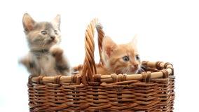 Kleine katjes stock video