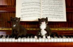 Kleine katjes Stock Foto's