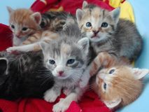 Kleine katjes Stock Foto