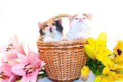 Kleine katjes in een mand Royalty-vrije Stock Fotografie