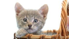 Kleine katjes in een mand stock videobeelden