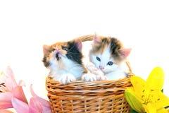 Kleine katjes in een mand en bloemen Royalty-vrije Stock Afbeeldingen