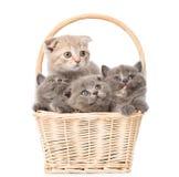Kleine katjes in mand die weg en omhoog eruit zien Geïsoleerd op wit Stock Foto