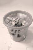 Kleine katjes onder witte veren Royalty-vrije Stock Foto's