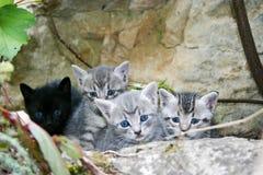 Kleine katten Royalty-vrije Stock Afbeeldingen