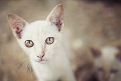 Kleine katten Royalty-vrije Stock Foto's