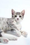 Kleine Katze Stockbilder