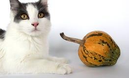Kleine Katze Lizenzfreie Stockbilder