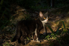 Kleine Katze lizenzfreies stockfoto