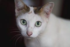 Kleine Katze auf dem Gebiet Stockfotos