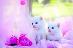 Kleine Katze auf Gras Stockbilder
