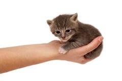 Kleine Katze in der Hand Stockbild