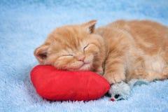 Kleine Katze, die auf dem Kissen schläft Stockfoto