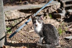 Kleine Katze entspannen sich unter einem Garten lizenzfreies stockbild