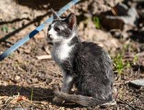 Kleine Katze entspannen sich unter einem Garten stockfotos