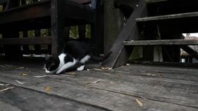 Kleine Katze im alten Dorfhaus stock video