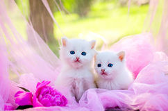 Kleine Katze, im Freien Lizenzfreie Stockfotografie