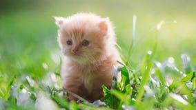 Kleine Katze im Gras lizenzfreie stockfotos