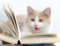Kleine Katze las ein Buch Stockfotos